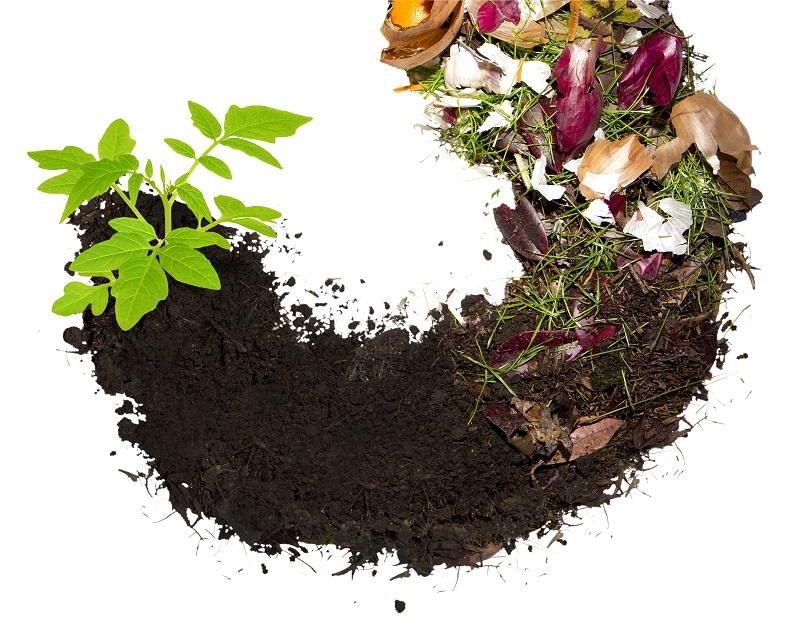 Biološki odpadki ne sodijo v rumen ali črn zabojnik | JKP-Prodnik